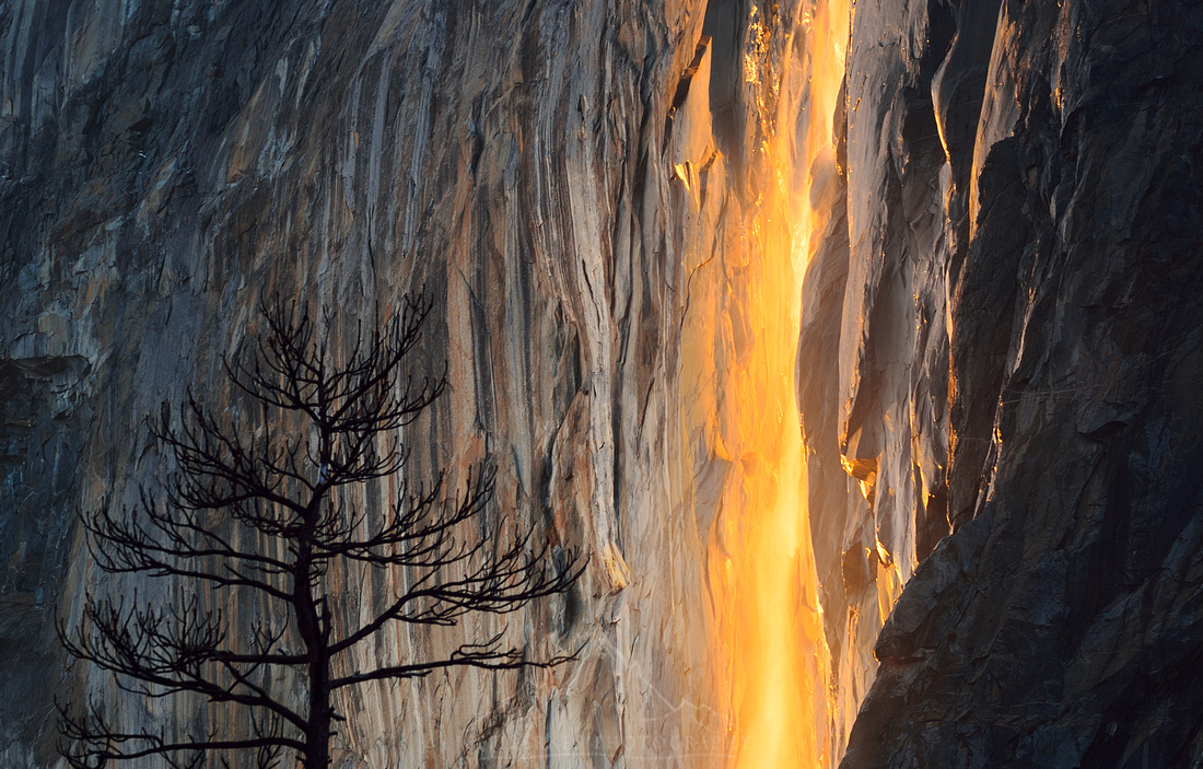 FIRE FALL AND TREE | YOSEMITE
