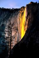 FIRE FALL AND TREE (Vert.) | YOSEMITE