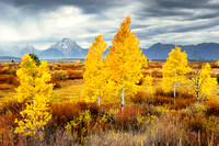 MOUNT MORAN AND FOLIAGE