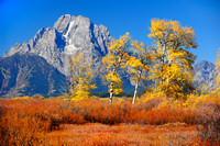 MOUNT MORAN AND ASPENS