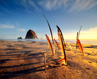 HAYSTACK ROCK AND FEATHERS